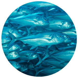 aquaculture applications