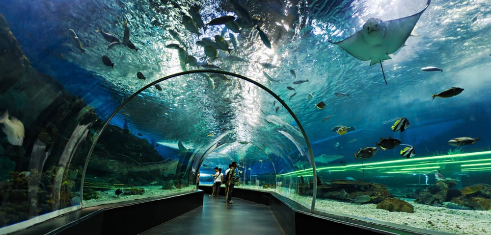 ocean park case study Ocean park is a marine-themed amusement park situated in the southern district of hong kong founded in 1977, ocean park has won several awards, including the world's seventh most popular amusement park and 33rd most visited tourist attractions in the world by forbes.